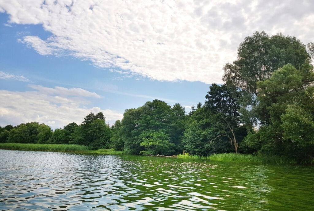 Kormorany na zwalonym drzewie nad jeziorem Urzędowym w Człuchowie